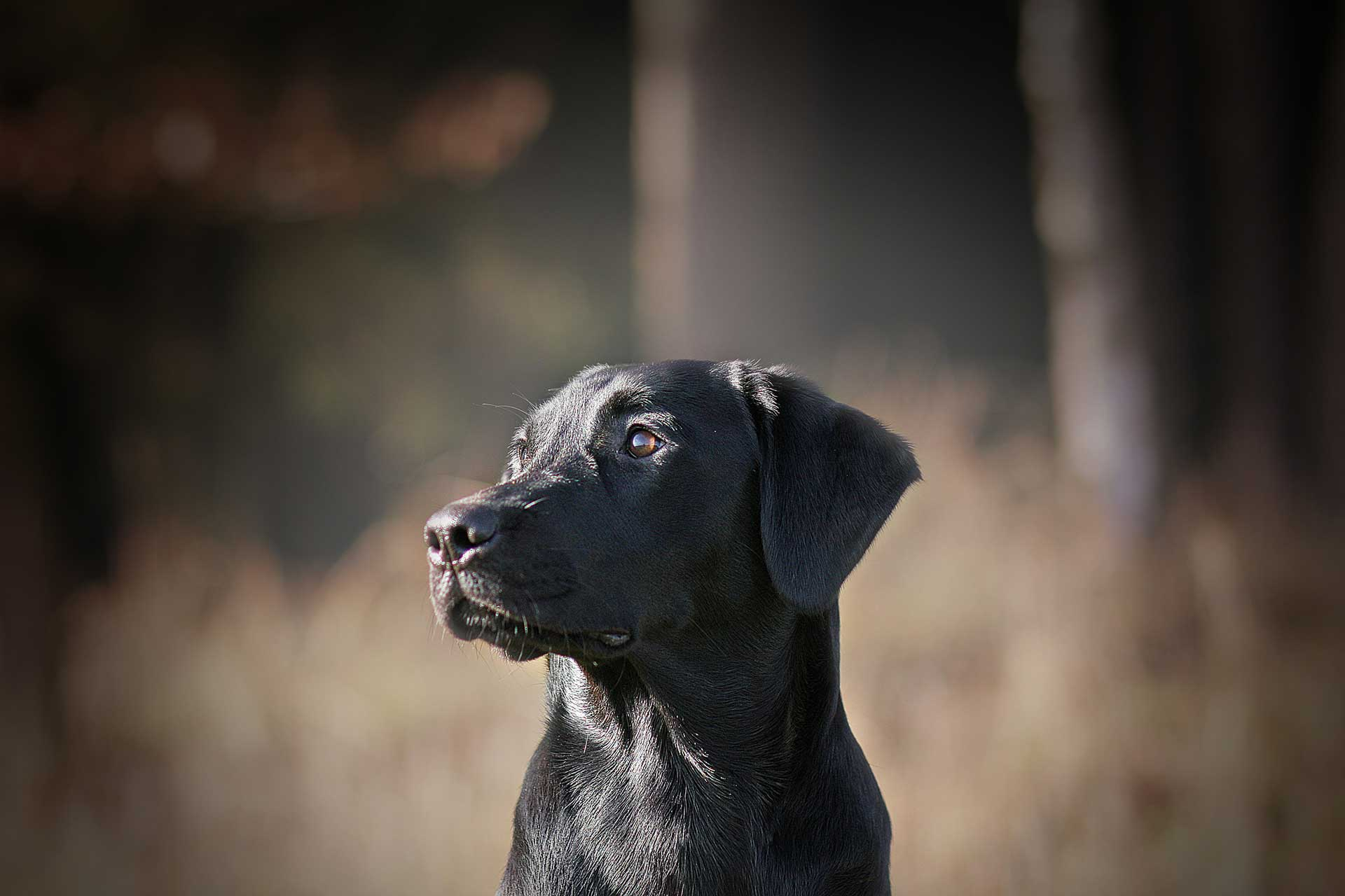 Hunde retten Menschenleben