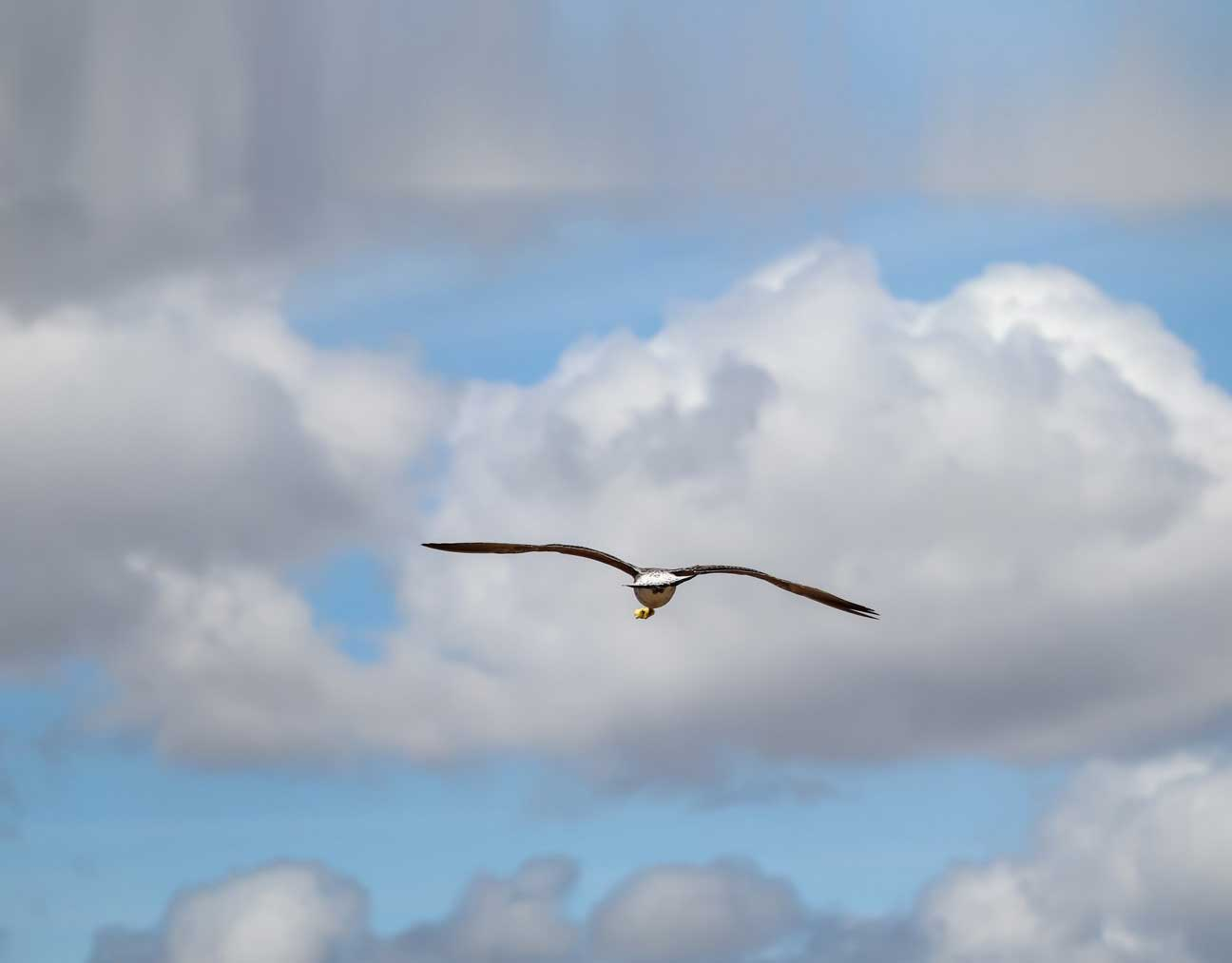 Mein Traum vom Fliegen